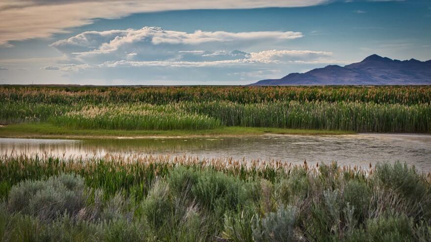 Photo of northeast quadrant wetlands.