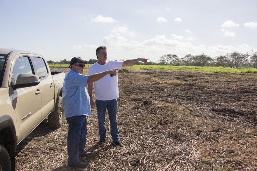 Mike McCloskey (right) and his cousin Manuel Perez are converting this former sugar cane farm into high-quality pasture for cattle.