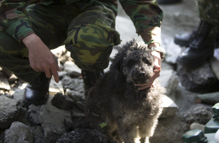 A soldier looks after a dog whose owner was reportedly killed in the earthquake that hit Taiwan early Saturday.