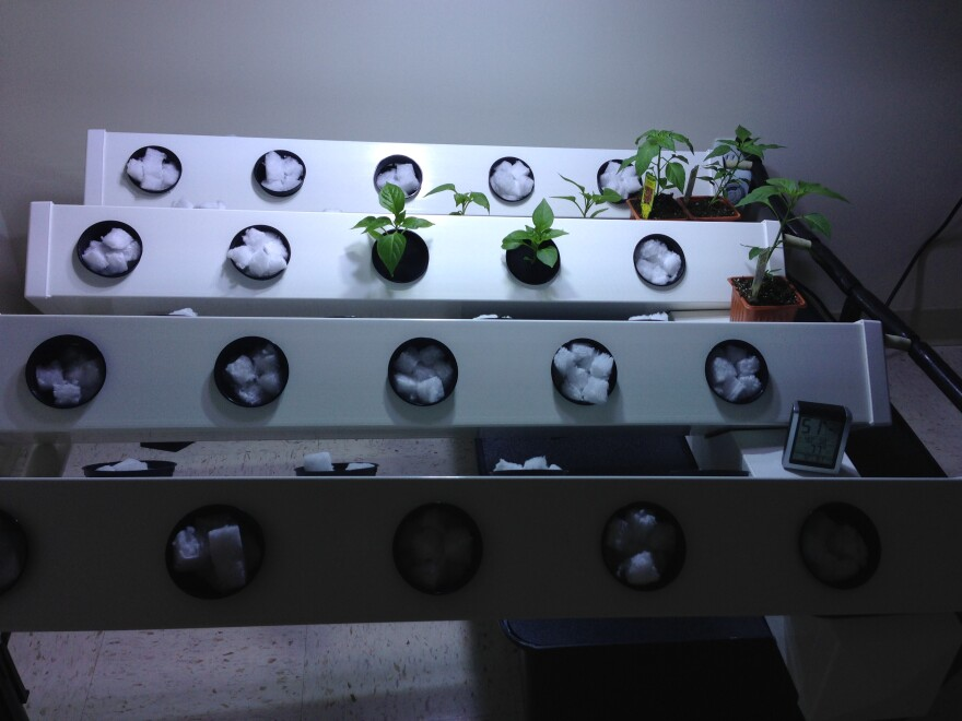 Small rooms display vegetable plants in various stages of growth.