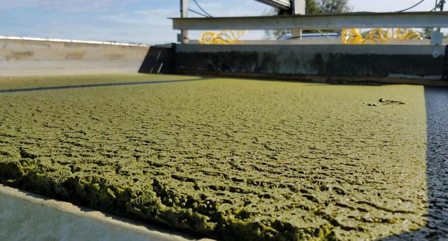 This photo, captured by an AECOM crew, shows a thickened algae mat on the surface of a flotation tank prior to being scraped into an algae harvest collection tank for disposal.