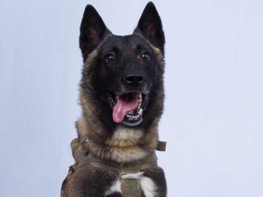 President Trump on Monday released a photograph of the dog used in the weekend raid in Syria that resulted in the death of Abu Bakr al-Baghdadi, the founder and leader of the Islamic State. The dog was injured in the operation but is making a full recovery, defense officials say.