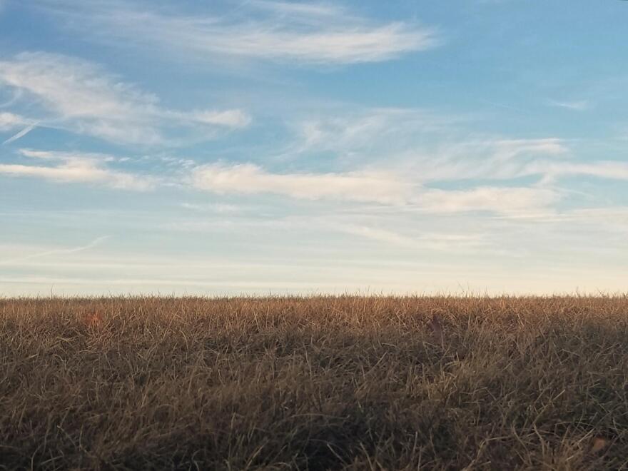 A dry crop field under a blue sky.