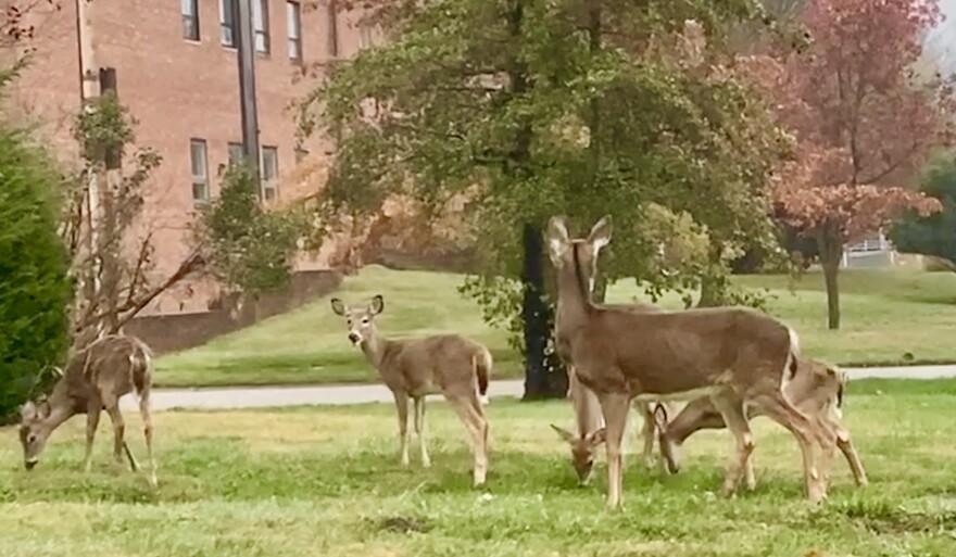 deer pic.jpg