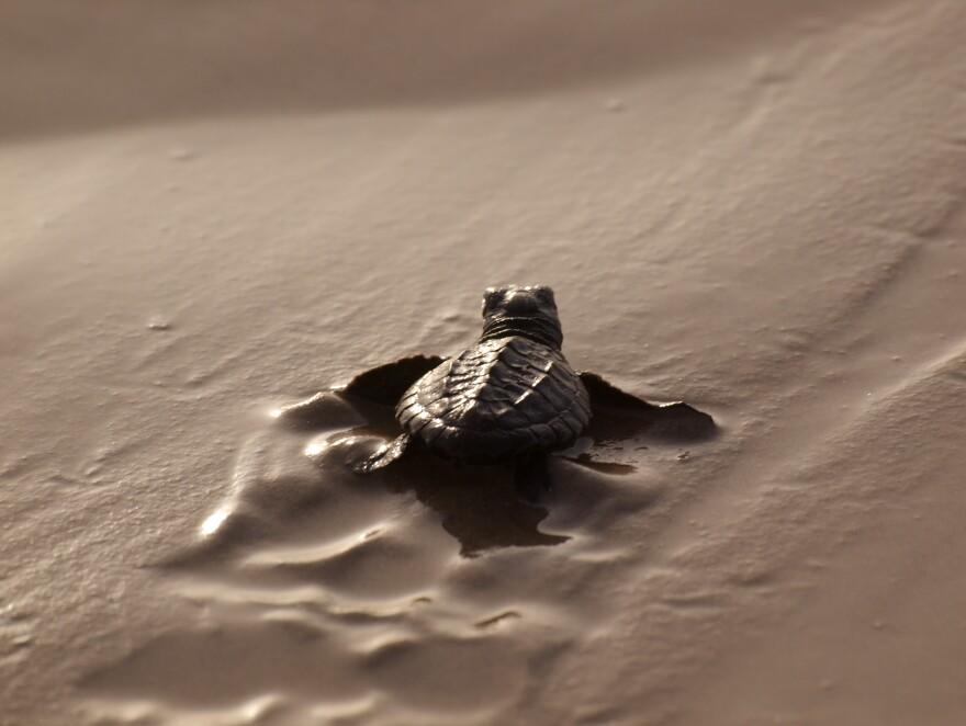 sea_turtle_terry_ross_flickr.jpg