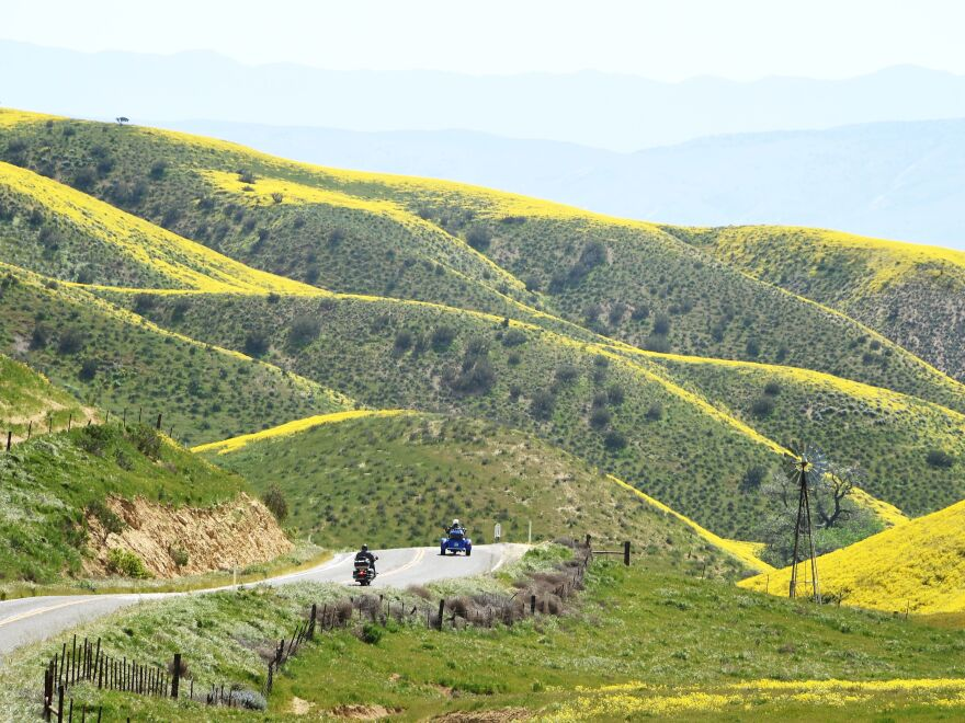 "Motorcyclists enter the Carrizo Plain National Monument near Taft, Calif., during a wildflower ""super bloom"" on Wednesday. After years of drought, an explosion of wildflowers in Southern and Central California is drawing record crowds."