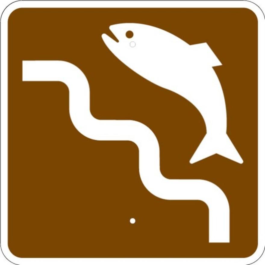 fishladder.jpg