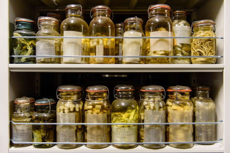 The Smithsonian's collection holds as many as 30 to 40 million parasites, including millions of worms.