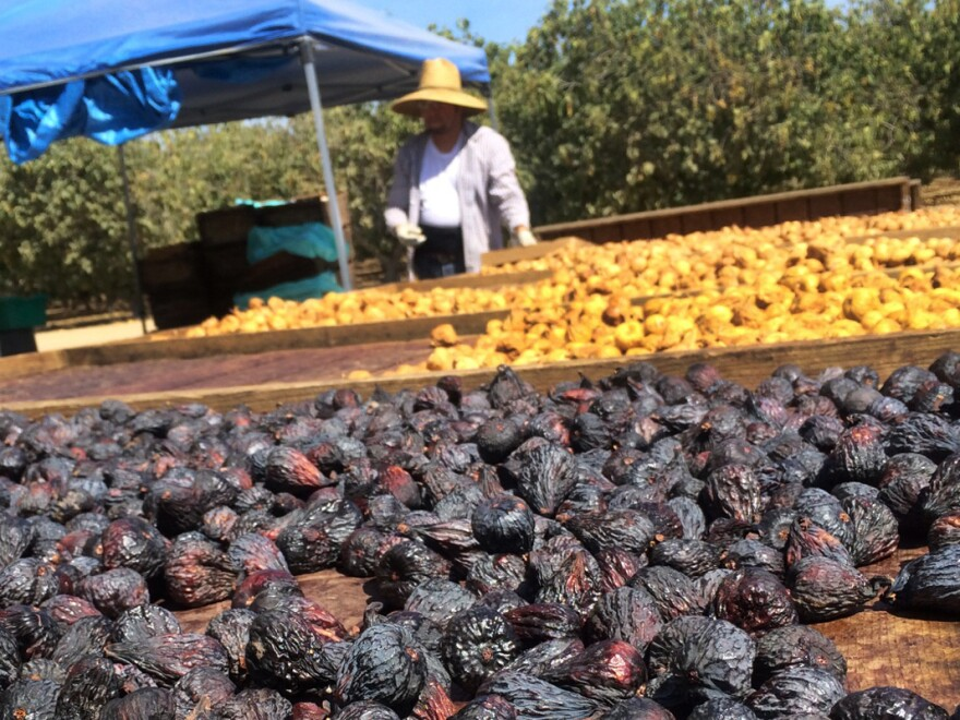 Figs dry on the tree, fall to the ground, are picked up by machinery, washed and then packaged.
