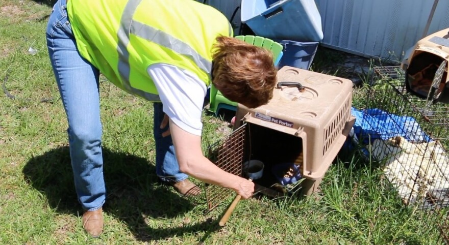 Working with the Bay County Mosquito Control Division,Congresswoman Gwen Graham (D-FL) finds mosquito larvae in an empty pet carrier.