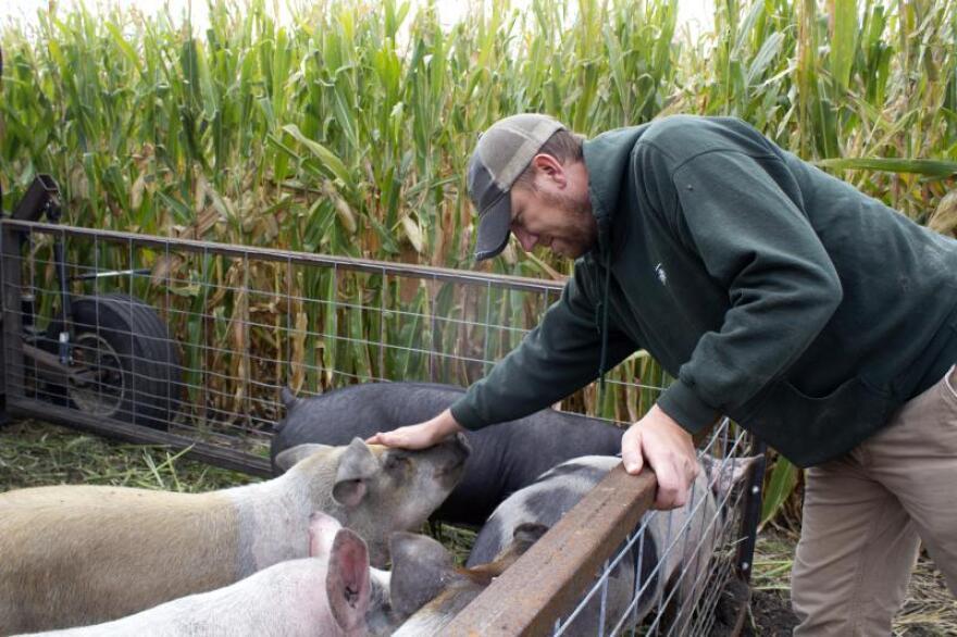 092820-am-ZackSmith-pigs.jpg