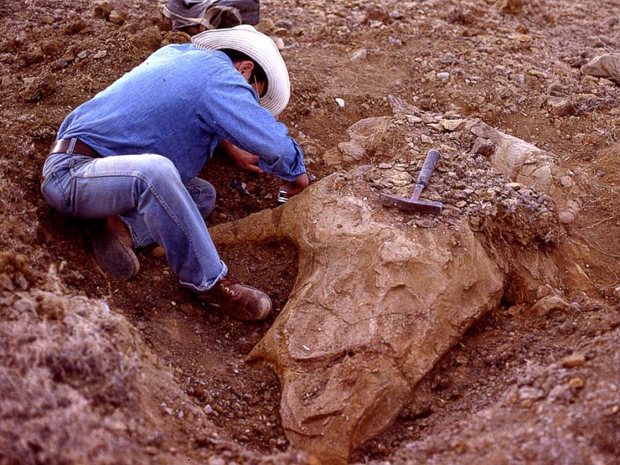 Carpenter digging.png