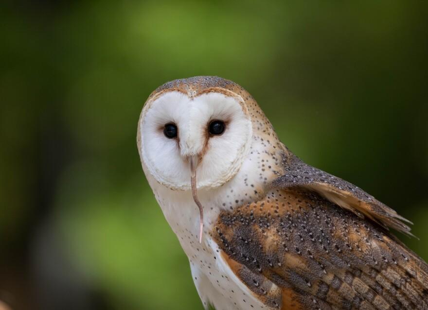 owl__hunger.jpg