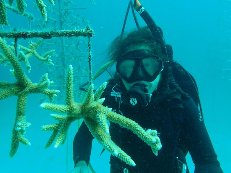 Cooperative Institute of Marine and Atmospheric Science (CIMAS) scientists have been studying the impact of warming oceans on reefs.