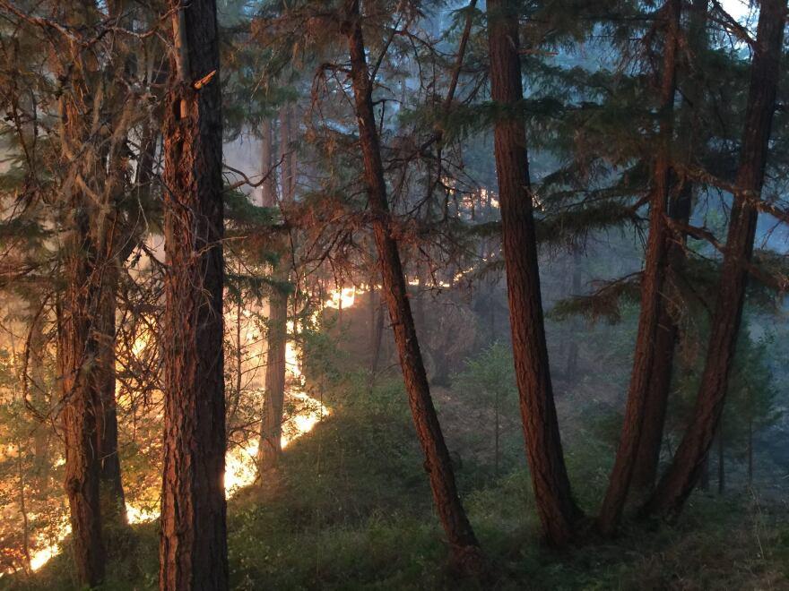 Stouts-Fire-trees-081615.jpg
