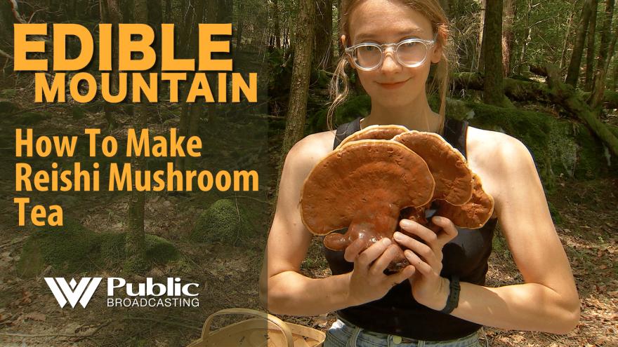 edible_mountain_-_reishi_3.png