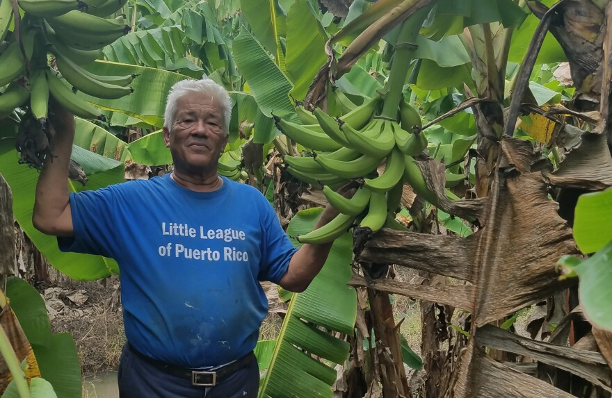"Luis Pinto lost about $300,000 worth of plantain trees, livestock, roads and fences on his farm near Yabucoa, Puerto Rico. ""When I saw the desctruction, I just cried. But I said, 'The show must go on,'"" he says."