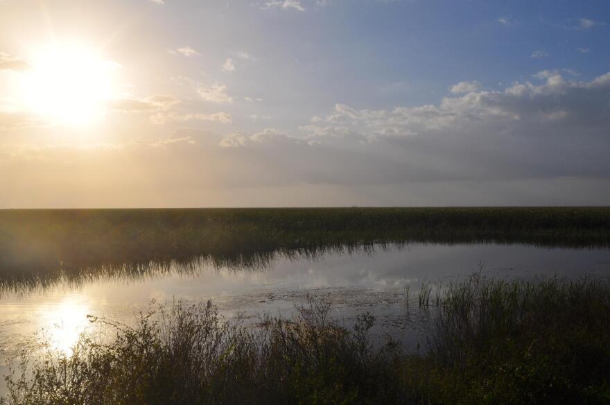 Everglades-1.JPG