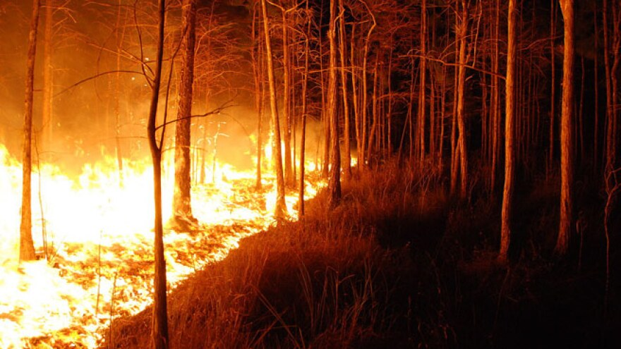 Wildfire63.jpg
