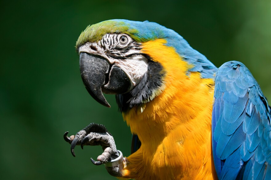 Is that struck by macaw, initial encounter, or struck by macaw, subsequent encounter?