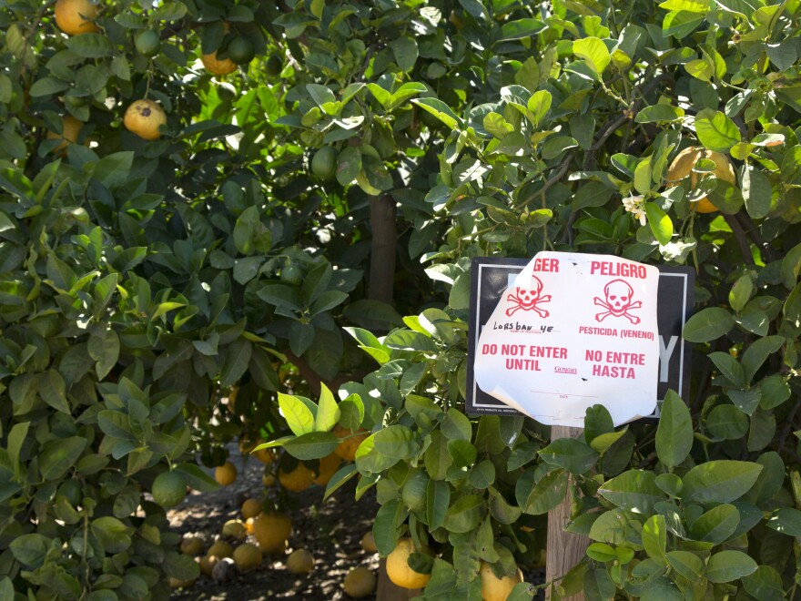 Pesticide warning sign in an orange grove. This sign, bilingual in English and Spanish, warns that the poisonous pesticide Lorsban has been applied to these orange trees. Photographed in Woodlake, in the San Joaquin Valley, California, USA.
