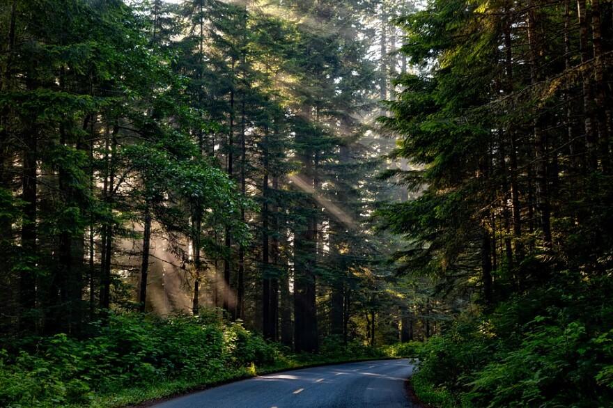 forest_road_sunlight_shafts.jpg