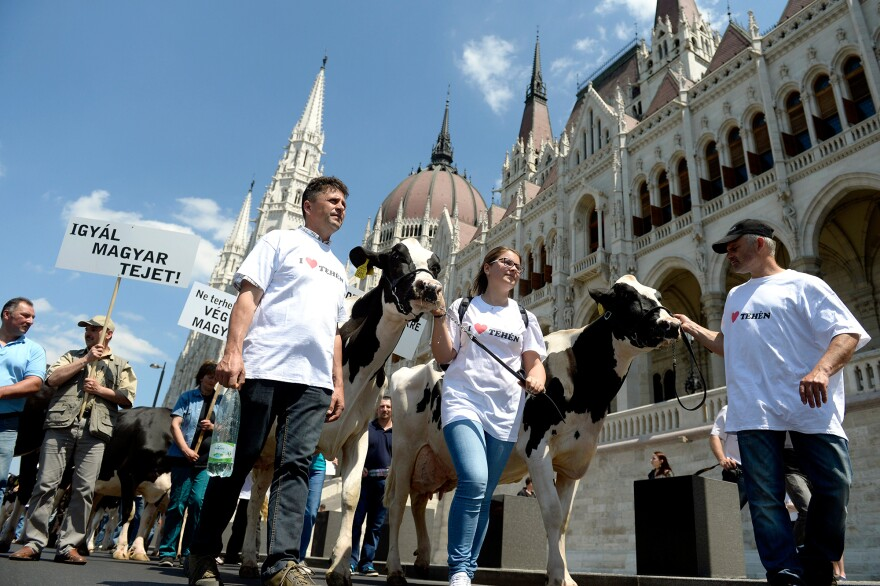 """Hungarian dairy farmers protest in front of Budapest's parliament in May. The banner reads: """"Drink Hungarian Milk!"""""""