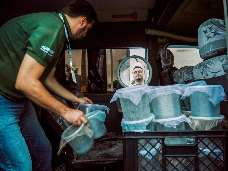 There are about 1,000 genetically engineered mosquitoes in each pot. Guilherme Trivellato of the biotech company Oxitec prepares to release them in Piracicaba, Brazil, in the hope of reducing the spread of Zika and other viruses.
