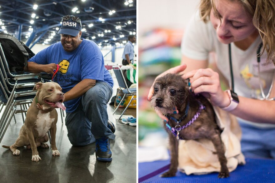 """(Left) """"What is going on with Blue is he is homeless just like we are,"""" Blue's owner Gary Singletary says. (Right) Dr. Joanna Web gives some Benadryl to dog Chloe to help with itchy ears."""