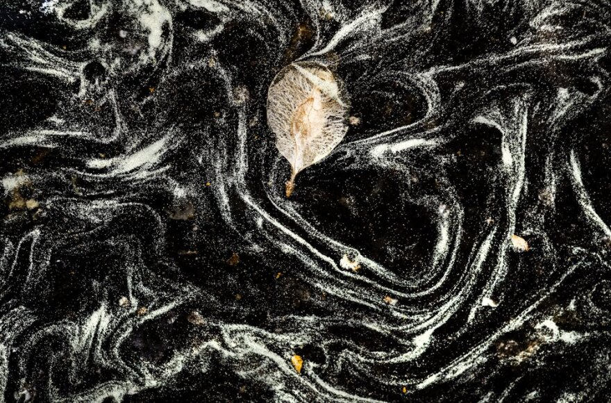 White pollen dust swirls around a puddle of water, which appears black.