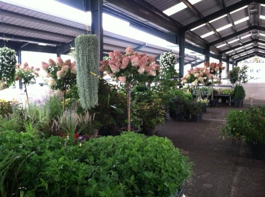 granny's_greenhouse.JPG