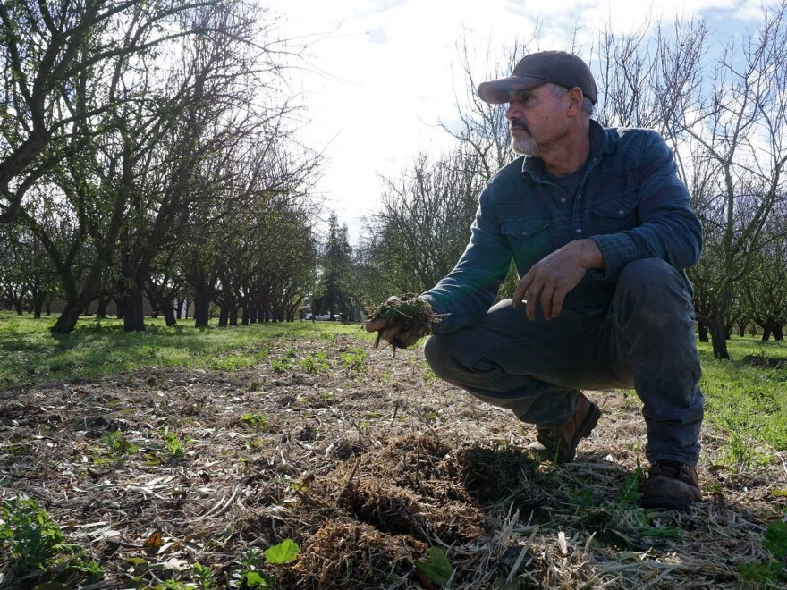 Jose Robles spreads mulch and compost under his almond trees with help from a California climate change grant.
