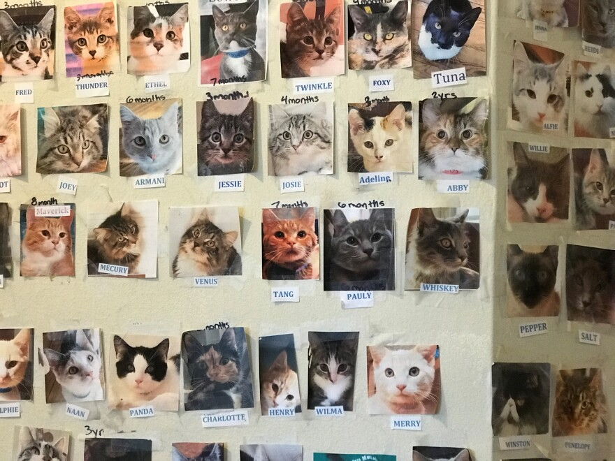"A photo of every cat that's ever been adopted from ""Purrs"" is posted on the walls in the house."