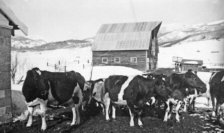 arnold_barn_with_cows.jpg