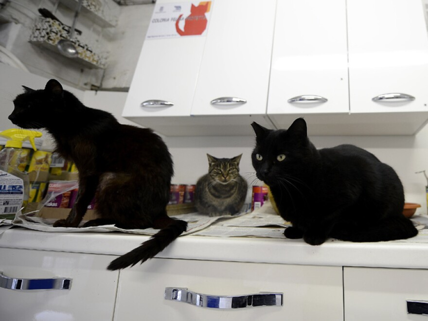 The Torre Argentina Cat Shelter Association neuters and vaccinates stray cats across the city. Administrators are concerned about the cats' fate if the shelter is closed.