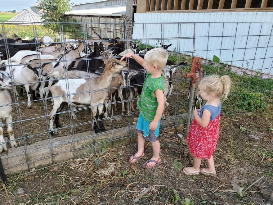 children_visit_grazing_goat_dairy.jpg