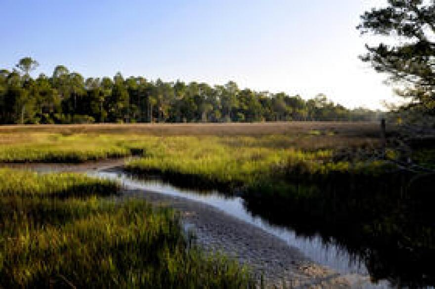 At the Withlacoochee Gulf Preserve, the forests are retreating as the salt marsh migrates inland.
