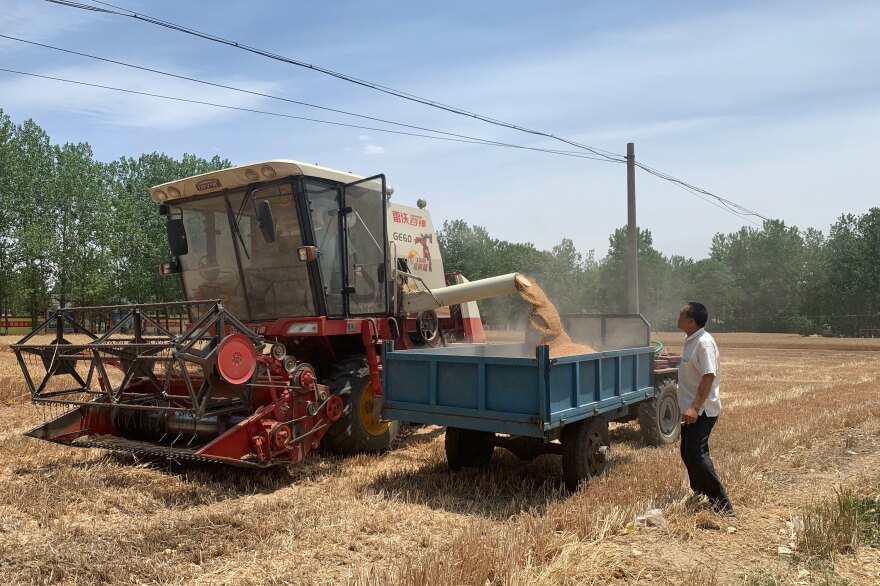 A tractor pumps harvested wheat kernels into the back of a villager's wagon, outside Zhumadian, Henan province.