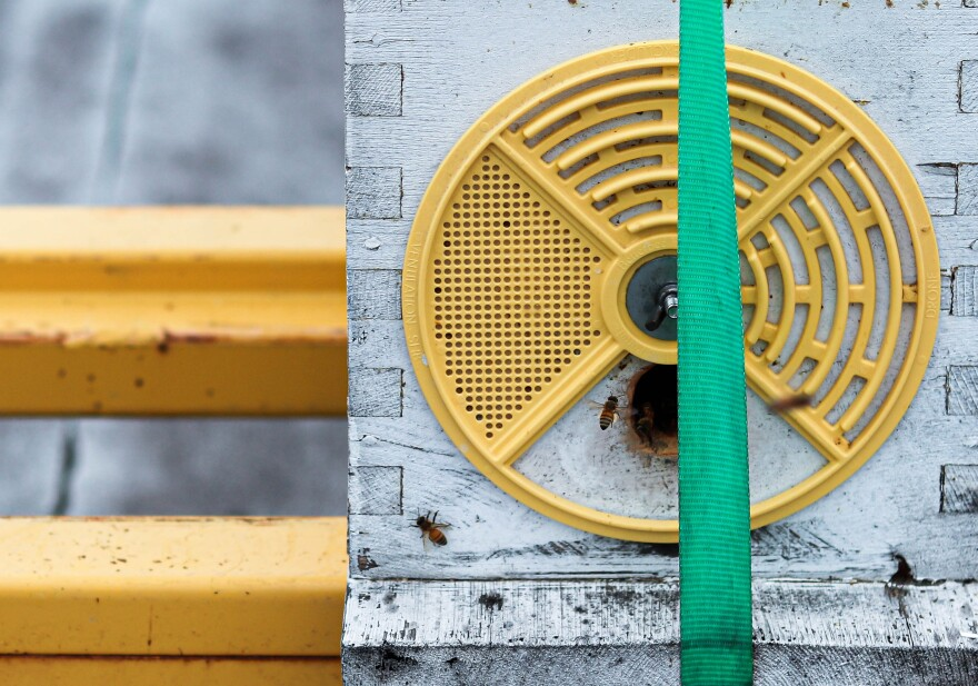 A bee hovering near a bee box