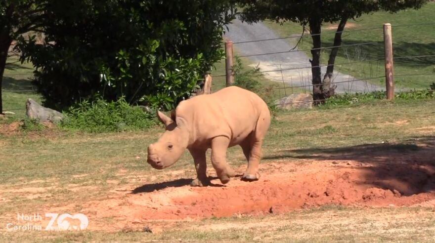 rhino_4.jpg