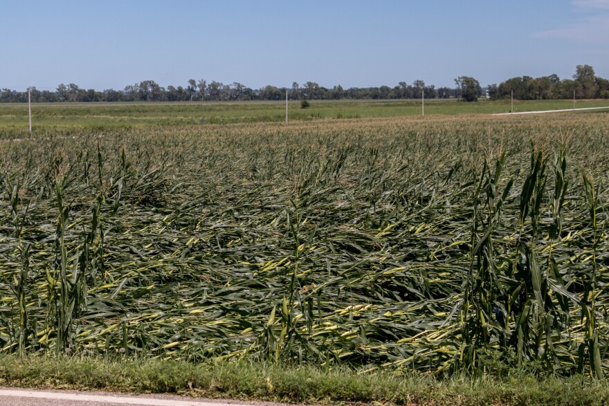 A corn field is completely flattened.