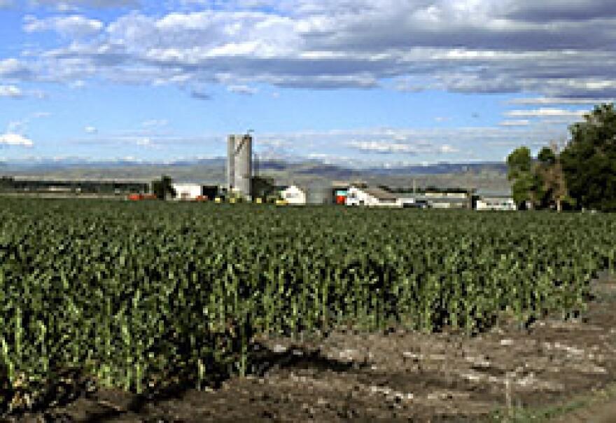 corn_scott_bauer_usda.jpg