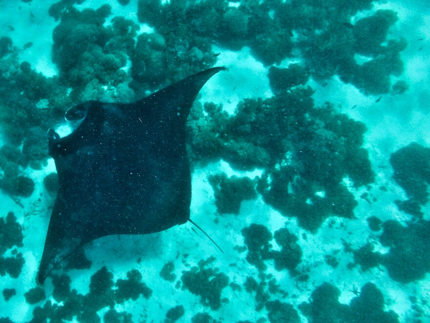 Komodo National Park, home to abundant marine life including manta rays, is popular with divers.