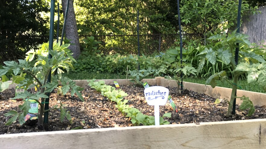 My brand-new back yard garden bed — I can't control the news, but I can plant some radishes.