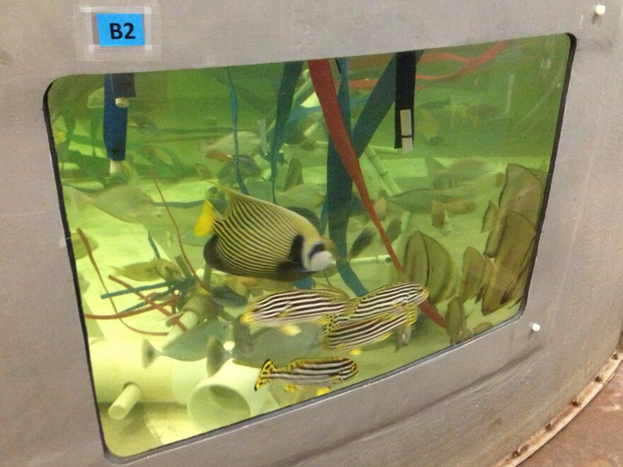 Fish wait for completion of their new reef home.