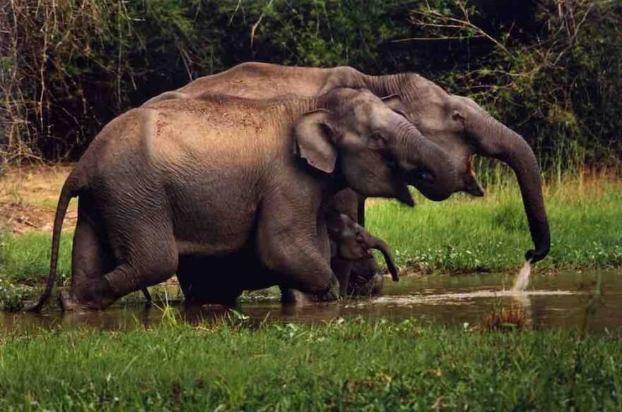 080817_cj_elephant_family_elephants_in_the_coffee.jpg