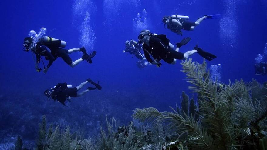 Force Blue is a group of special operations veterans from around the world who repurposed their military skills for the betterment of marine conservation.