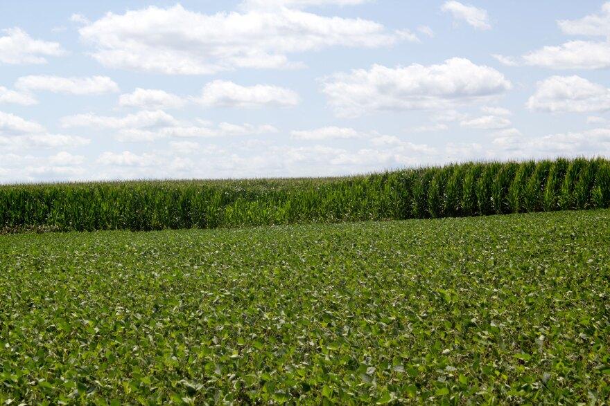 072219-am-corn_soybeans.jpg