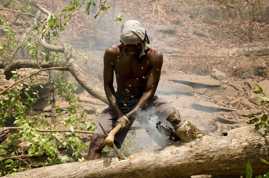 Yao honey hunter Orlando Yassene chops open a bees' nest in a felled tree in the Niassa National Reserve, Mozambique.