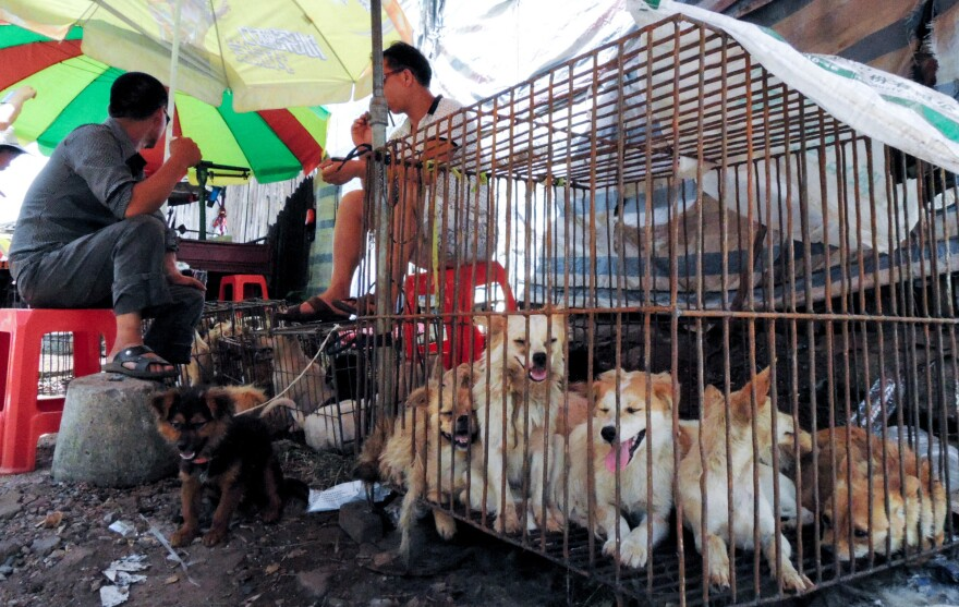 Dogs are sold at a market a day before the annual dog meat festival on June 21, 2015 in Yulin, China.